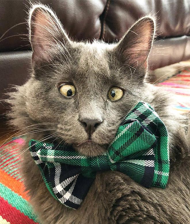 Meet Belarus, An Adorable Cross-Eyed Cat That's Stealing Everyone's Hearts