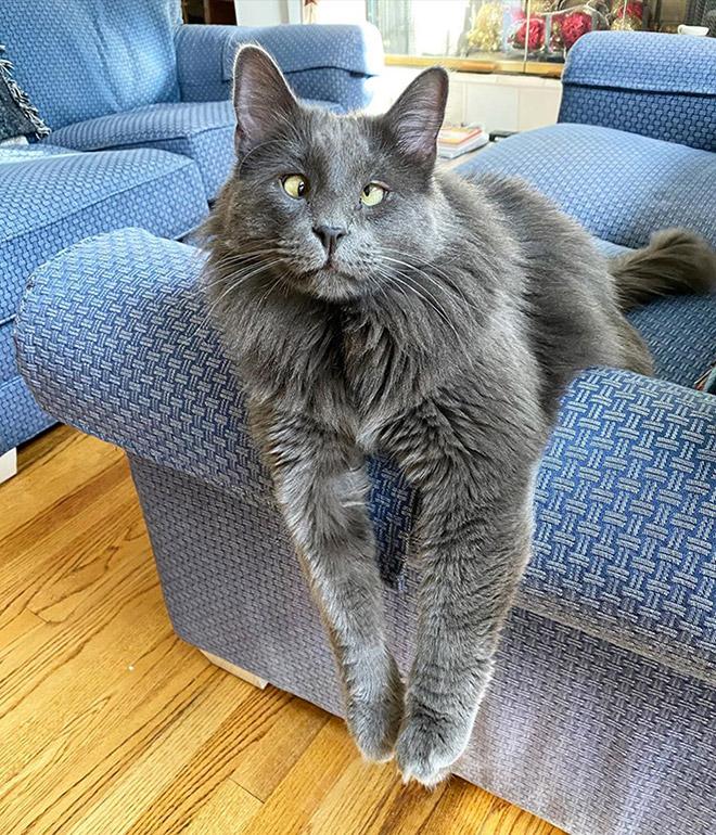 Meet Belarus: an adorable cross-eyed cat.