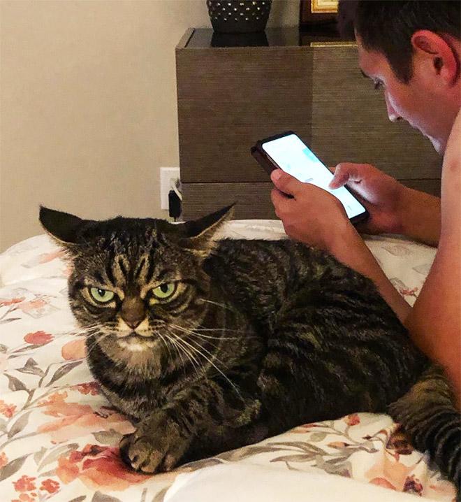 Wrinkly naked Sphynx cat Xherdan looks VERY grumpy as he
