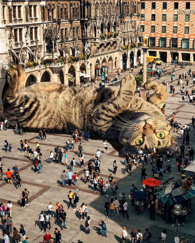 Giant cats are the best cats.
