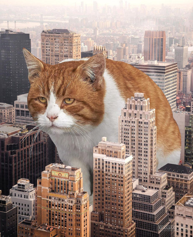 Artist Matt McCarthy Uses Photoshop To Create Surreal Landscapes With Giant Cats