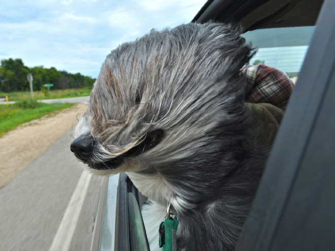 Funny pet photo.