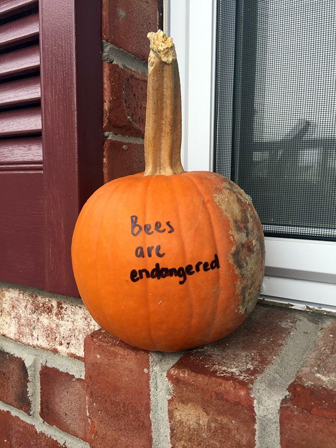 Scary Halloween pumpkin.